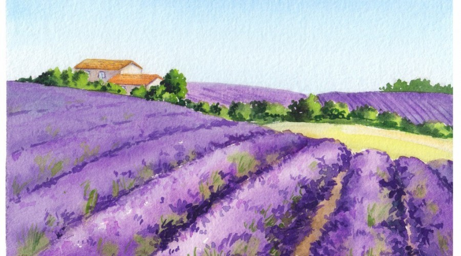 Lavender Fields in Provence, spiritual home of Rose Wine | P!nk | Billy Joel
